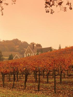 Silver Oak Cellars Winery and Vineyard, Alexander Valley, Mendocino County, California, USA by John Alves