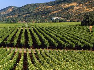 Wine Country, Napa Valley, California by John Alves