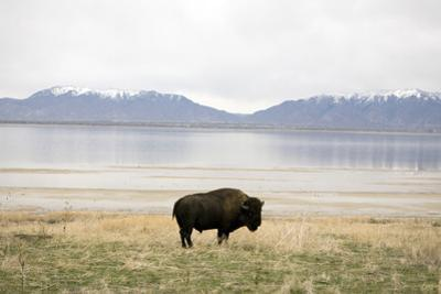 Antelope Island. Road Trip by John Arsenault