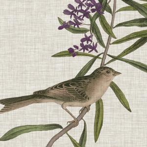 Avian Crop IX by John Audubon