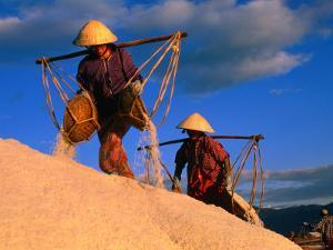 Female Labourers Carrying Sea Salt in Salt Fields of Doc Let Beach, Khanh Hoa, Vietnam by John Banagan