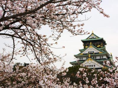 Osaka Castle with Cherry Blossoms by John Banagan