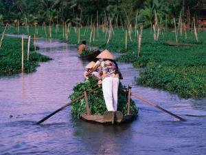 Women Rowing to the Market on the Mekong Delta, Vietnam by John Banagan