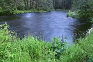 OR, Deschutes NF. Early summer vegetation and the Metolius River by John Barger
