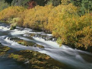 OR, Deschutes NF. Fall colored shrubs along the Metolius River by John Barger