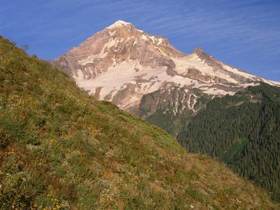 OR, Mount Hood NF. Mount Hood Wilderness, West side of Mount Hood and summer wildflowers