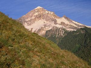 OR, Mount Hood NF. Mount Hood Wilderness, West side of Mount Hood and summer wildflowers by John Barger