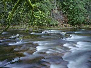 OR, Mount Hood NF. Salmon-Huckleberry Wilderness, Salmon River by John Barger