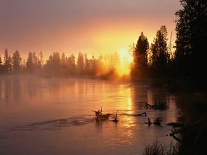 Oregon. Deschutes National Forest, rising sun breaks through morning fog along the Deschutes River. by John Barger