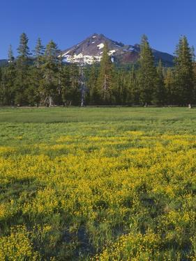 Oregon. Deschutes NF, Broken Top rises above coniferous forest and meadow of subalpine buttercup. by John Barger