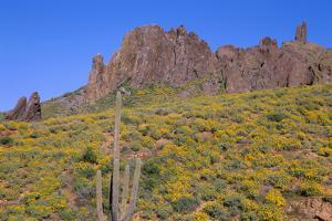 USA, Arizona, Tonto National Forest, Superstition Wilderness by John Barger