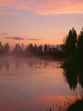 USA, Oregon, Deschutes National Forest. Fog hovers above the Deschutes River at sunrise. by John Barger