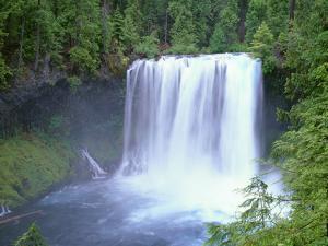 USA, Oregon. Willamette National Forest, McKenzie River plummets over Koosah Falls in spring. by John Barger