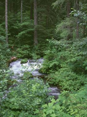 USA, Oregon, Willamette National Forest. Roaring River and surrounding forest in springtime. by John Barger