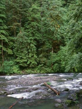 USA, Oregon. Willamette National Forest, South Santiam River and lush old growth forest. by John Barger