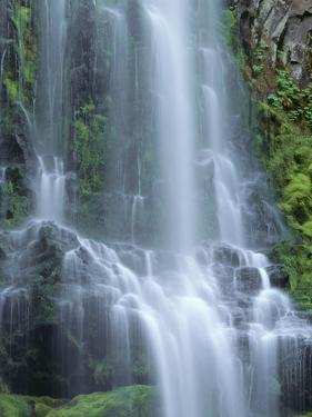 USA, Oregon. Willamette National Forest, Three Sisters Wilderness, Lower Proxy Falls and lush moss. by John Barger