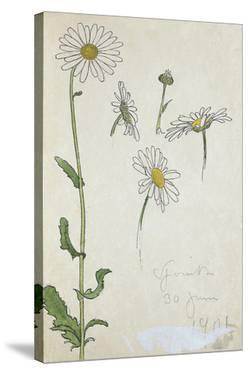 Blom Ritning by John Bauer