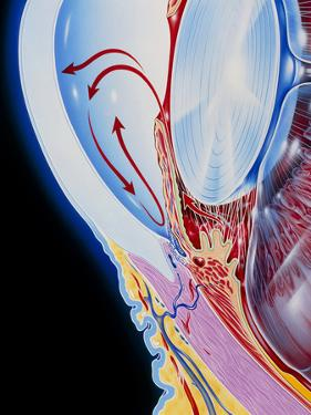 Art of Section Through Human Eye Showing Glaucoma by John Bavosi