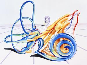 Artwork of Inner Ear by John Bavosi