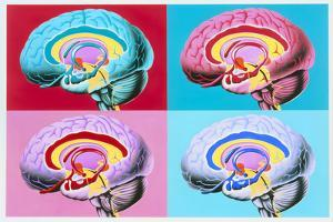 Artworks Showing the Limbic System of the Brain by John Bavosi