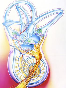 Inner Ear by John Bavosi