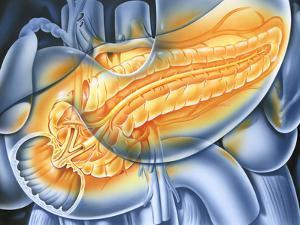 Pancreas by John Bavosi