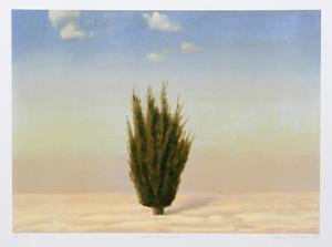 Cedar Tree, Israel by John Beerman