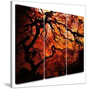 Fire Breather: Japanese Tree 3 piece gallery-wrapped canvas by John Black