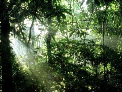 Tropical Rainforest, Panama by John Brown