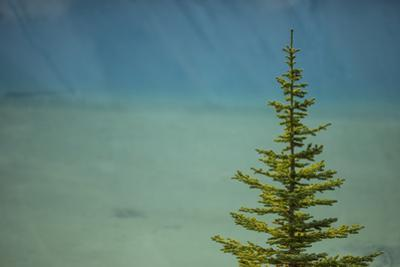 A Lone Pine Tree in Banff National Park by John Burcham