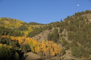 Autumn Foliage in Colorado by John Burcham