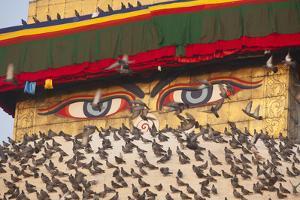 Pigeons on Boudhanath Stupa in Kathmandu, Nepal by John Burcham