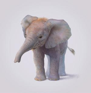 Elephant by John Butler Art