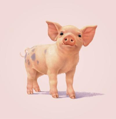 Pig by John Butler Art