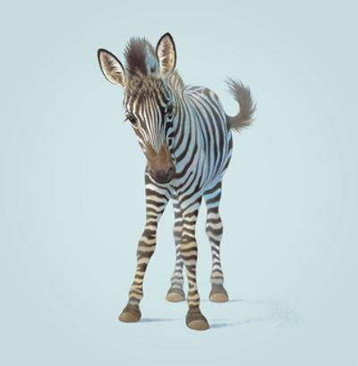 Zebra by John Butler Art