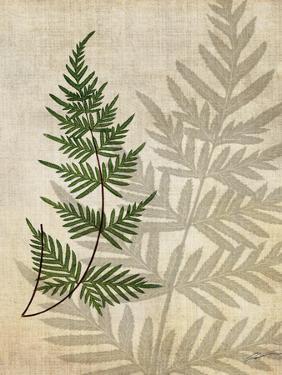 British Ferns III by John Butler