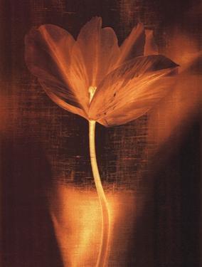 Bronze Tulip I by John Butler