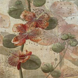 Desert Botanicals I by John Butler