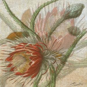 Desert Botanicals II by John Butler