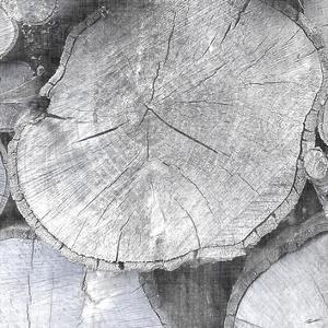 Logging Light IV by John Butler