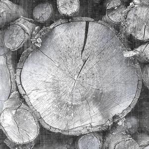 Logging Light VI by John Butler