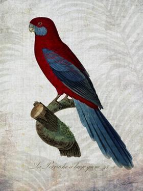 Parrot Jungle II by John Butler