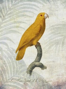 Parrot Jungle V by John Butler