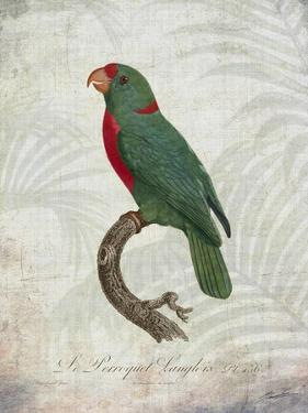 Parrot Jungle VI by John Butler