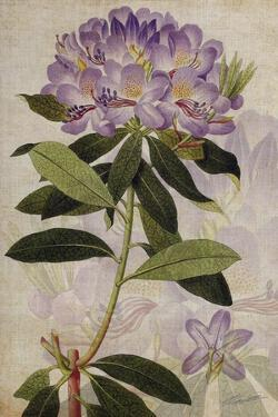 Rhododendron II by John Butler