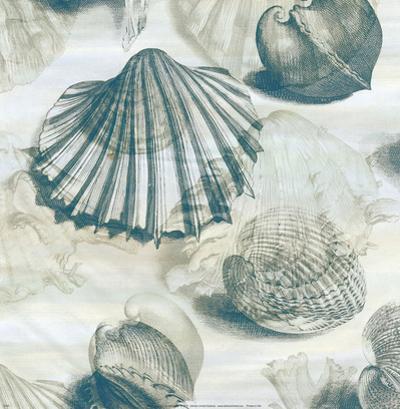 Shell Engraving 1 by John Butler