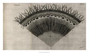 Tree Fan III by John Butler