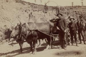 Gold Fever. Prospectors Going to the New Gold Field by John C.H. Grabill