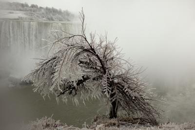 A Tree Coated in Heavy Ice Next to Niagara Falls