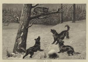 Treeing a Lynx by John Charles Dollman
